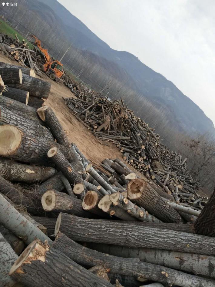 主要经营白杨木原木、桐木原木收购及板条加工和对外销售