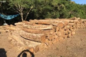 北美洲木材行业预计2019年春季开局良好