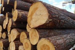 欧盟建议乌克兰解除原木出口禁令 改善贸易环境