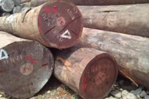 木材市场上常见的十大非洲硬木品种,你知道多少?