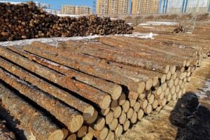 中欧木业成功开辟俄罗斯木材贸易通道