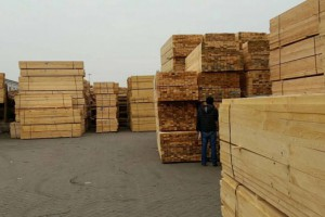 池州樟子松木材价格