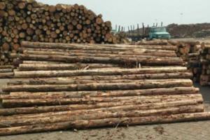 新西兰加拿大美国木材占太仓木材进口量的70%