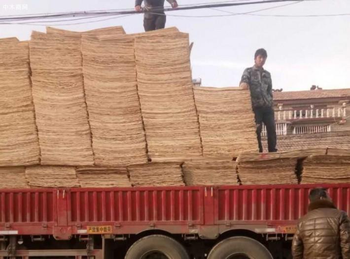 江苏徐州青松木业位于徐州市丰县,长期生产杨木三拼,杨木单板,杨木板皮,杨木面板的品牌企业