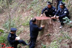 欧盟木材法规执行 我国中小家具企业受冲击