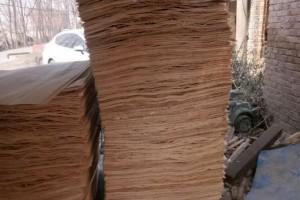 大量杨木三拼板皮厂家直销