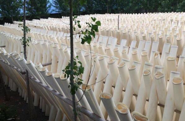 杨木木皮就是杨木单板