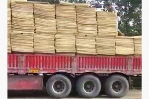 杨木三拼木皮装车视频