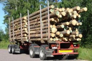 湖南办木材运输证取消多种证明