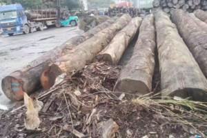 南美原木市场继续表现疲软,小单也是爱