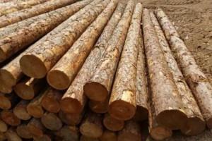 3年多来,我国每年减少木材产量373.4万立方米