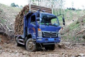 广东新取消木材运输证等22项证明事项