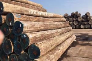 乌拉圭玫瑰桉原木(修枝材)厂家价格