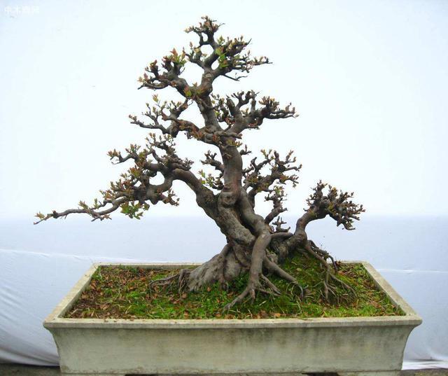 对于那些影响树势的枝条以及徒长的树枝一定要注意好打理