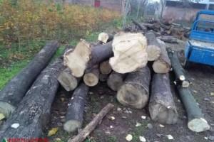 可定制 各种规格 桐木条子 白椿木原木加工