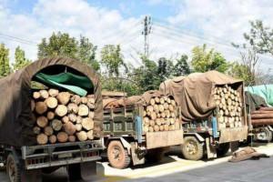 长期垄断木材运输 江西一恶势力团伙被提起公诉