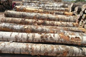 太平洋西北地区硬木大部分转移到越南、墨西哥等木材制造商手中