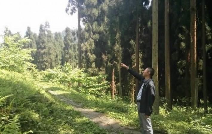天然林禁伐3年后我国的木材状况