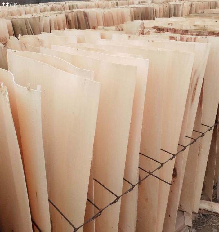 杨木单板很薄,在1mm以下