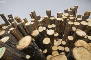 木材工业正在成为加蓬重要的部门产业