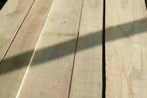 2.4米白椿木、白杨木烘干板,自然宽度