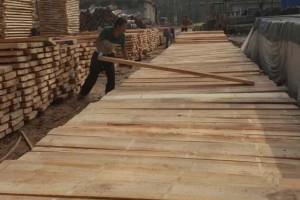 白杨木锯材加工厂视频