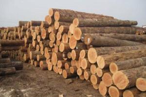 舟山建筑方木多少钱