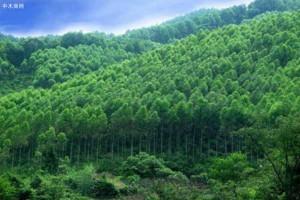 我国林业产业总产值达7.33万亿元