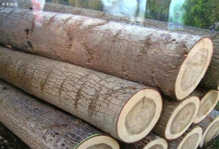 杨木三拼单板皮的优点先从杨木讲起