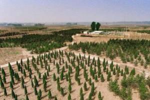 雄安新区启动今年20万亩植树造林工作