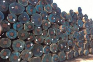 张家港木材市场仍有低价减仓的消息传出