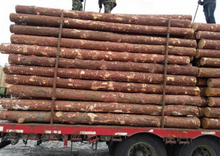 黑龙江省绥芬河市专业经营进口俄罗斯落叶松原木的品牌企业