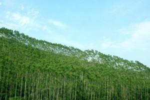 广西2019年力争实现林业总产值达到6100亿元