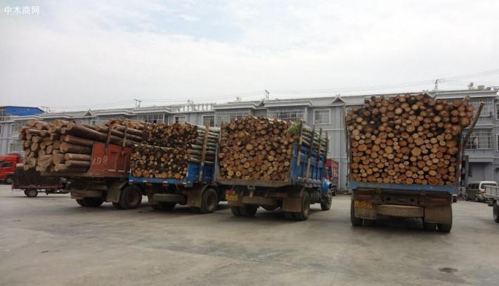 江西婺源严厉打击非法运输、加工松木违法犯罪行为