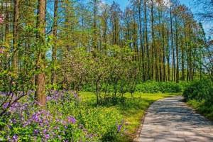 贵阳森林覆盖率提升至44.49%