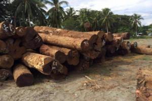 香港海关检获14300公斤怀疑紫檀木材