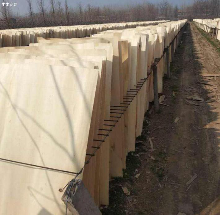 杨木三拼木皮又称为杨木单板、杨木皮、杨木面板、杨木板皮