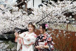 今年樱花何时开放?原来日本是这样预测樱花花期的