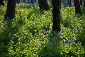 园林景观苗木应用——地被植物