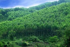 贵州省林业事业高质量发展迈上新台阶