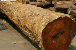 巨大大果紫檀原木低价出售,草花梨到底是什么木材?和黄花梨,花梨木有何关系?