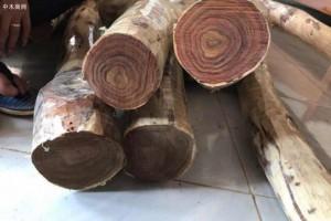 2019年1月份越南出口木材和木制品约达9亿美元
