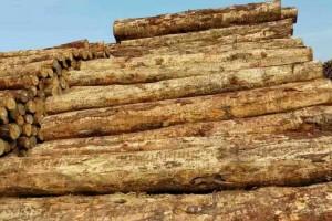 新西兰软木出口价格上涨