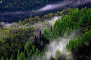 到2025年力争全国林业总产值提高50%以上
