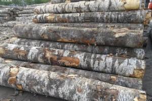 2019年1月满洲里口岸木材进口量持续回落