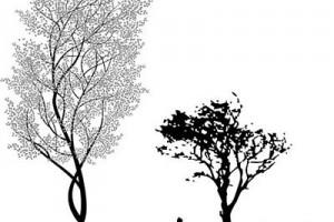 榆树和枣树哪个生命力强!