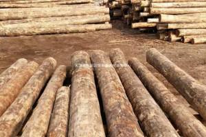 方木、板材、锯末、刨花、木龙骨、木托盘、原木、圆柱、防腐木
