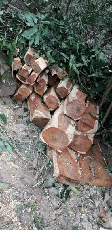红酸枝开锯时,木材散发一种辛香,闻之有酸辛味