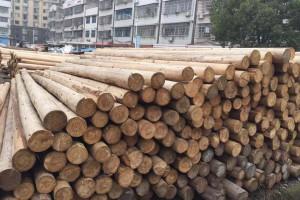 福建杉木檩条价格行情_2019年2月27日
