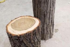 木头可以怎么玩?